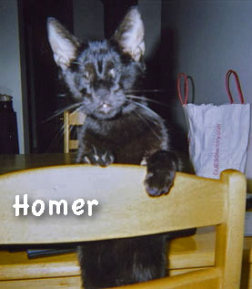 Homer the blind cat