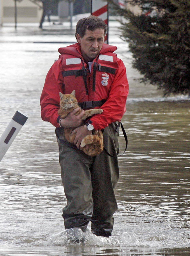 Coloado cats in the recent floods