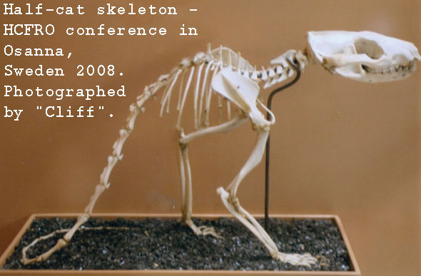 half-cat-skeleton