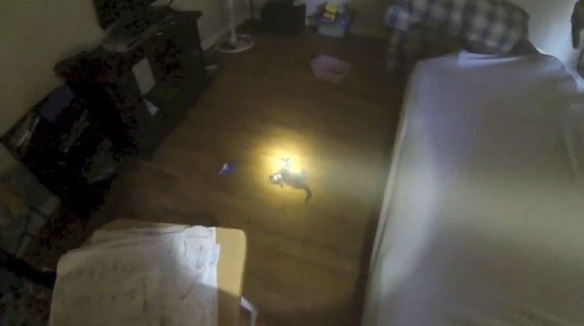housefire-kitten