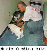 mario feeding cats