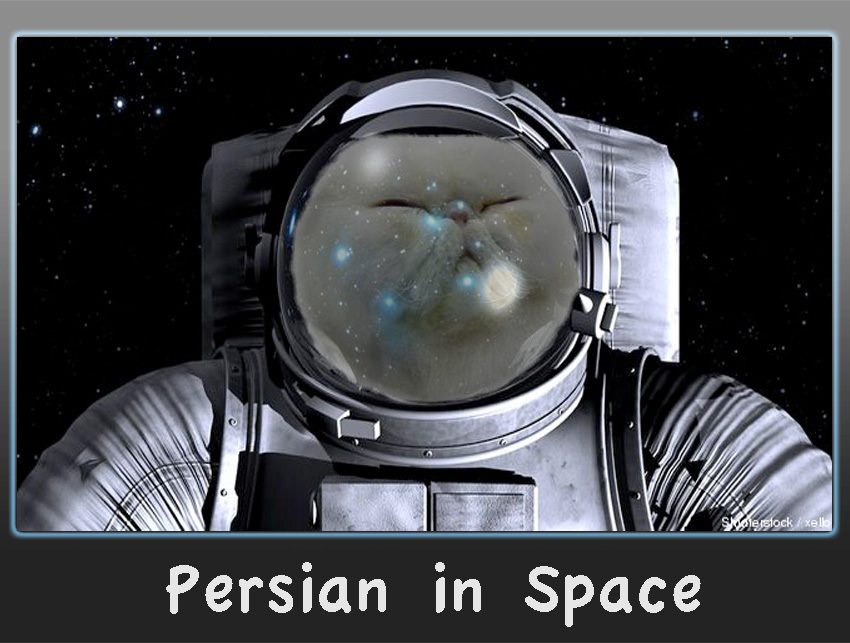 Persian cat in space