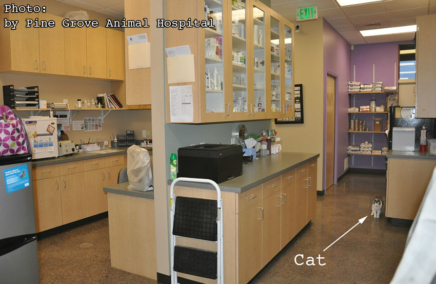 Pine Grove Animal Hospital