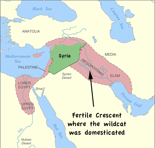 Syria is in the fertile crescent