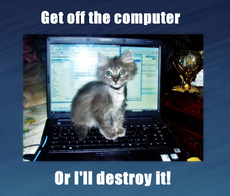 Cats destroying electronic gadgets