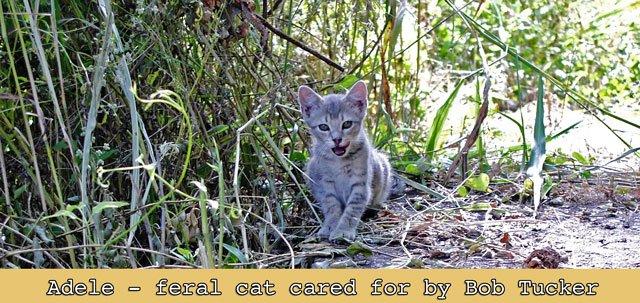 Adele a feral cat