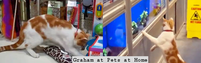 Pet stores should adopt a store cat