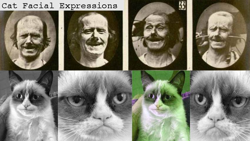 Cat facial expression