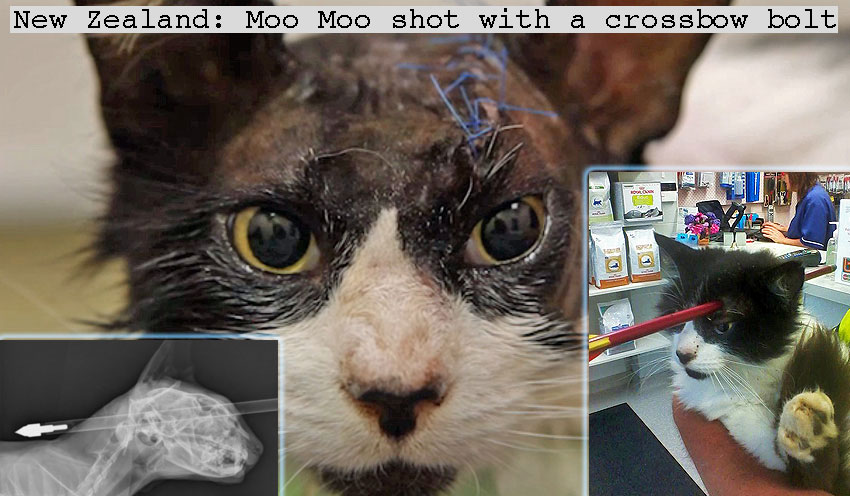 New Zealand cat shot with crossbow bolt