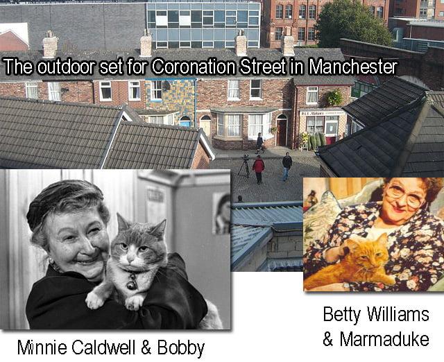 Coronation Street Cats