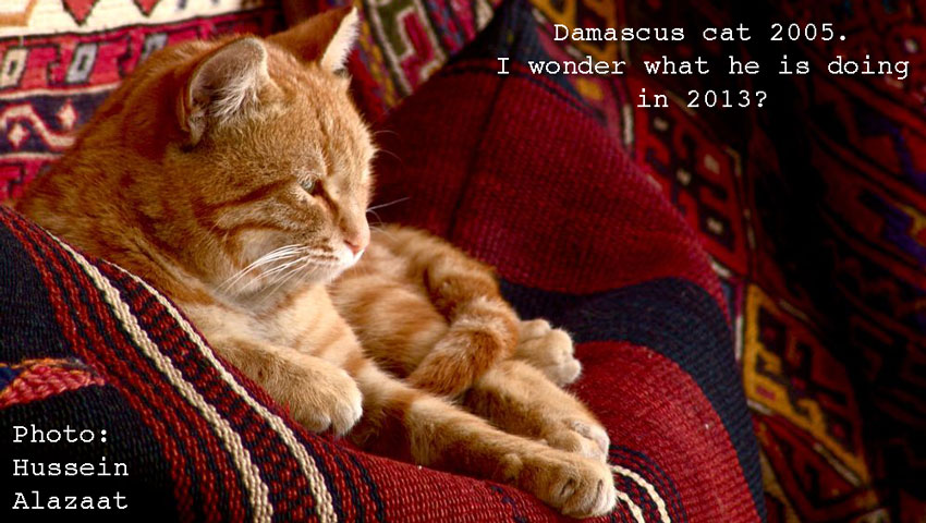 Damascus cat
