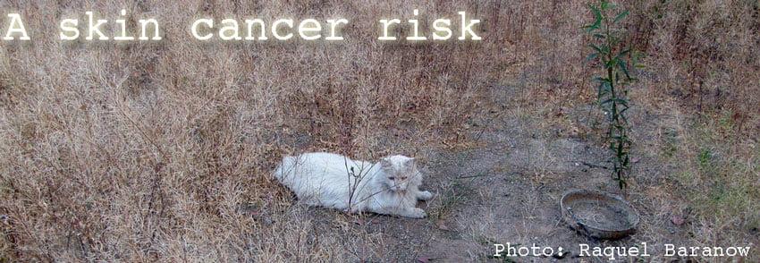 Feline skin cancer