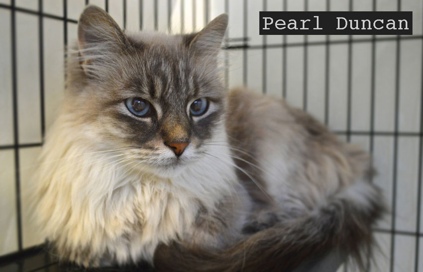 Pearl Duncan beautiful rescue cat