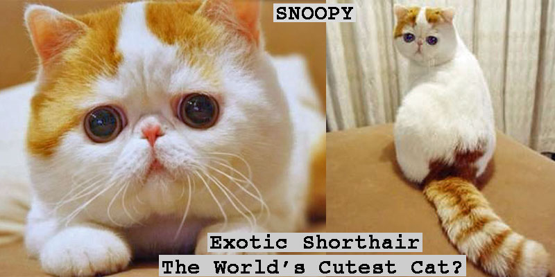 Snoopy Worlds Cutest Cat