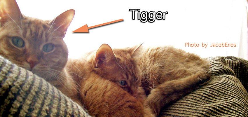 Tigger cat name