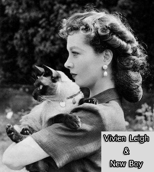 Vivien Leigh and her Siamese cat New Boy