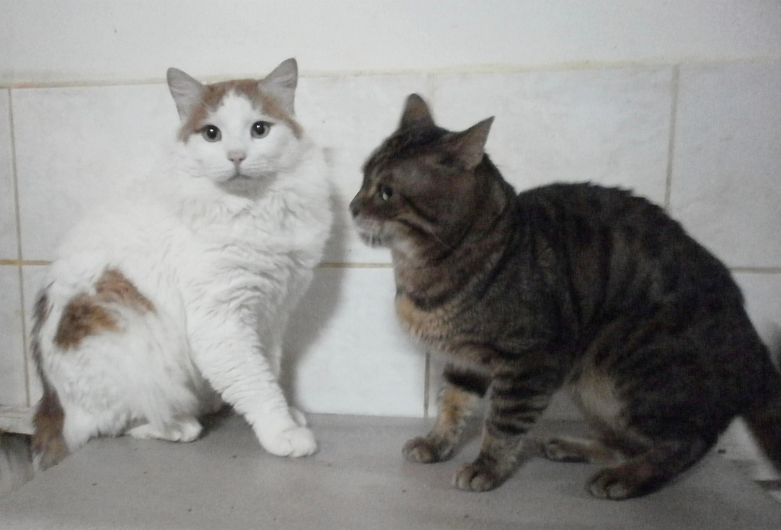 Two of Harvey s Northern Cyprus rescue cats playing