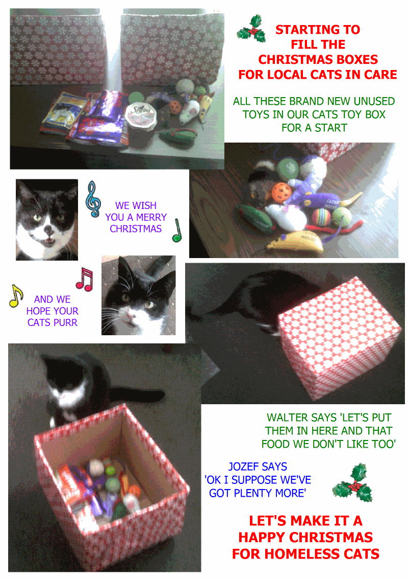CHRISTMAS BOXES FOR CATS IN CARE