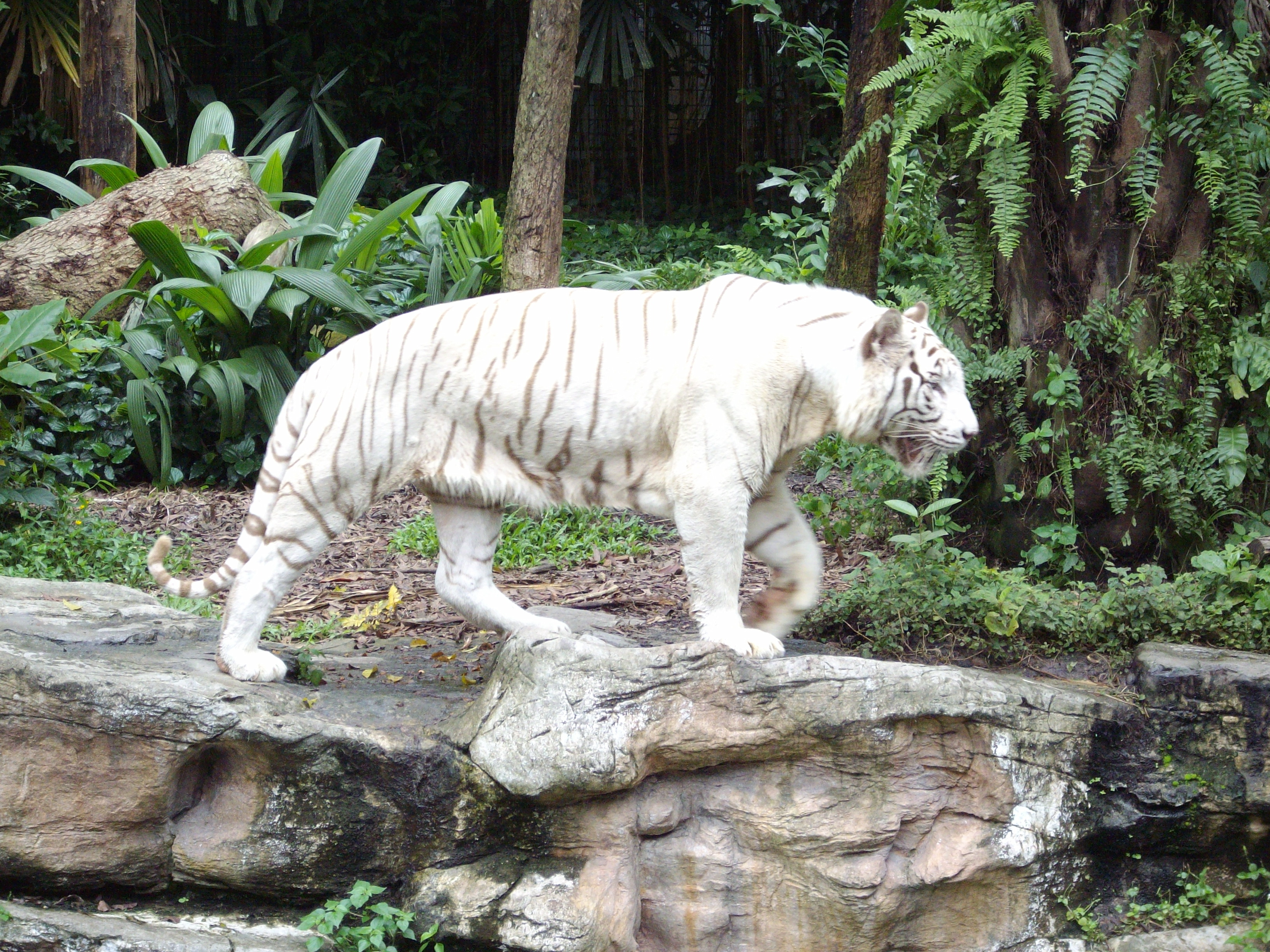 Are zoos good for animals essay