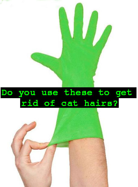 Using damp rubber gloves to get rid of cat hairs