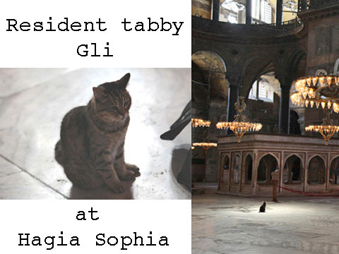 Cat at Hagia Sophia