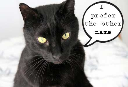 Does your cat have several names