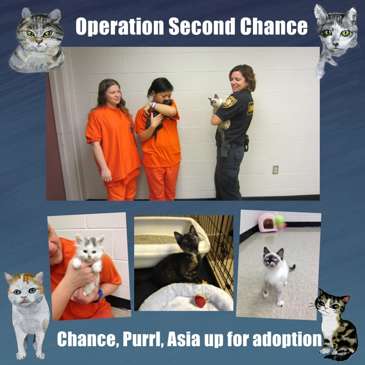Convicts foster rescue cats