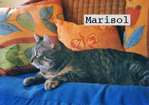Marisol a cat rescued from the garbageMarisol a cat rescued from the garbage