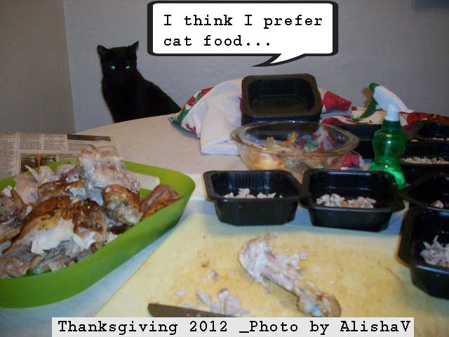 Thanksgiving Day is not good for cats