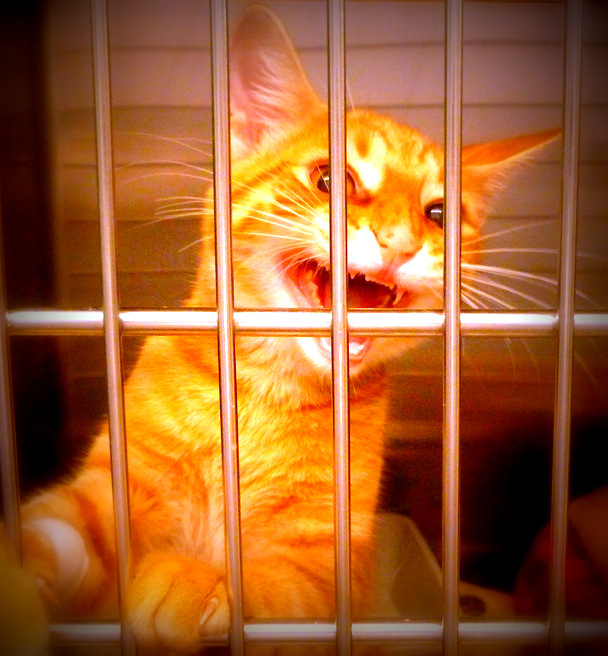 Cat at shelter usa