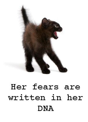 Cat fear written into DNA