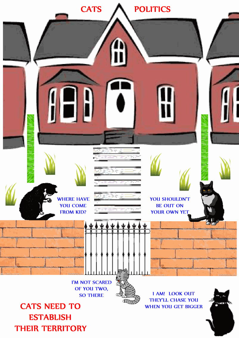 cats politics