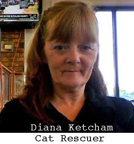 Diana ketcham Cat Rescuer