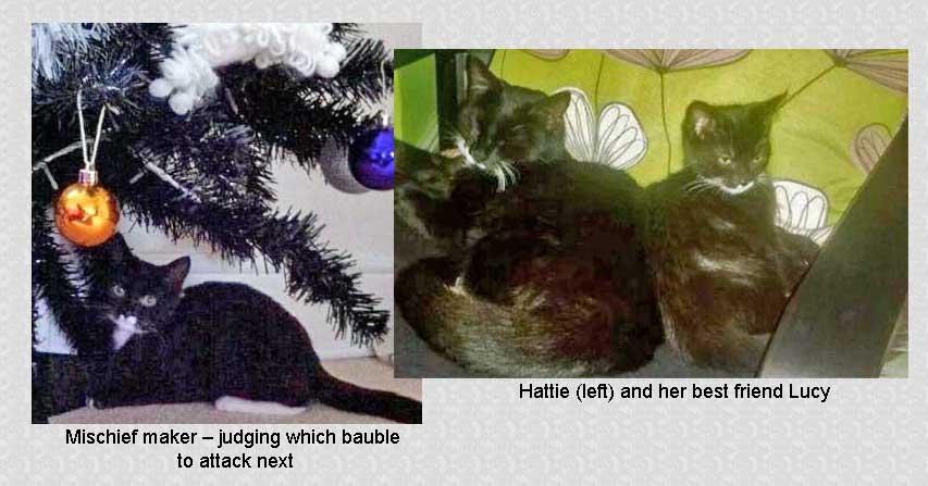 Hattie kitten