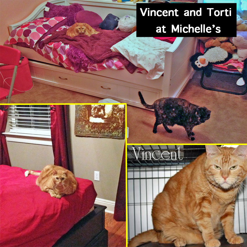 Vincent and Torti rescue cats