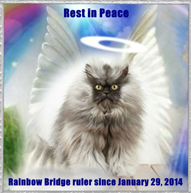 Colonel Meow has died