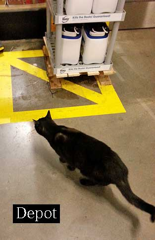 Depot a cat living at a store USA