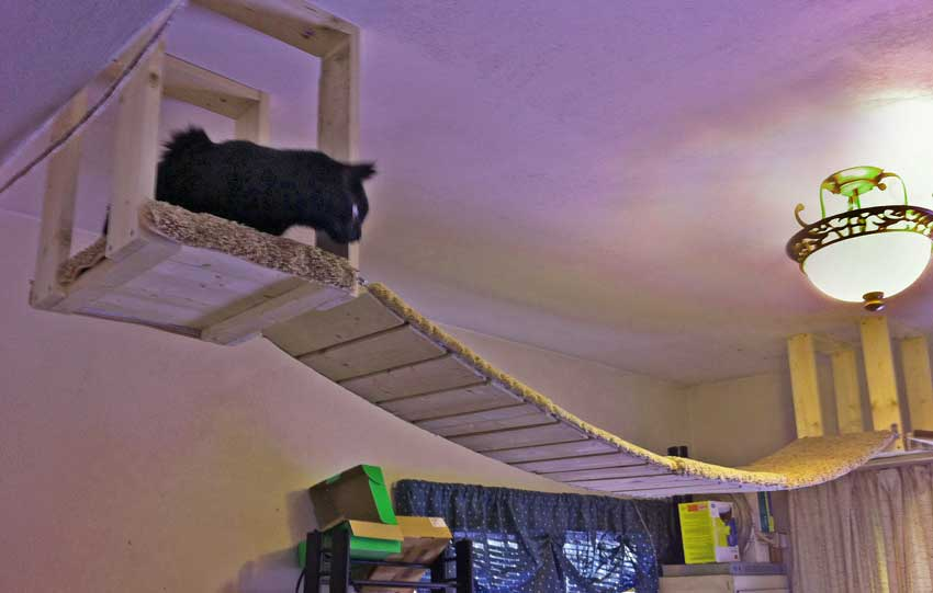 Cat's arial indoor platform and walkway