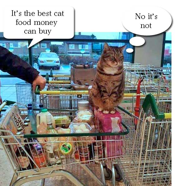 cat on supermarket trolley