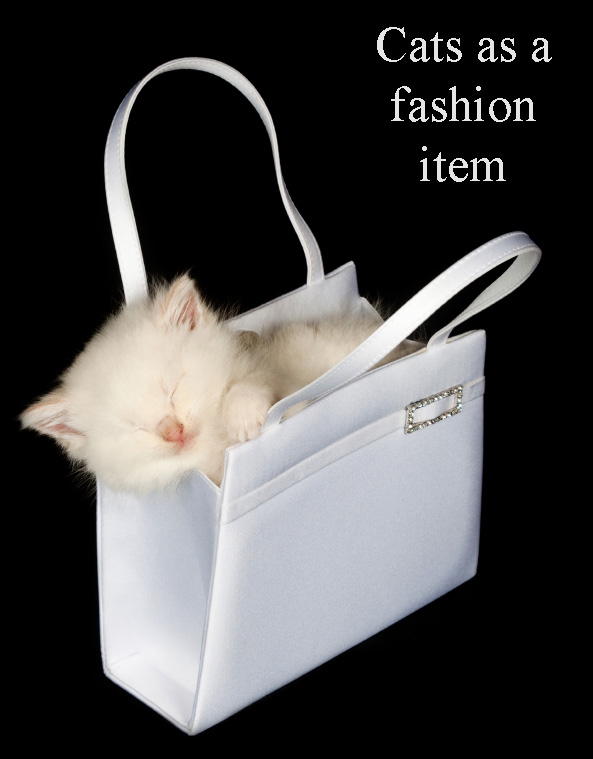 Cats as a fashion item