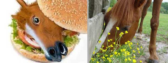 Horses - ban on slaughtering horses for meat