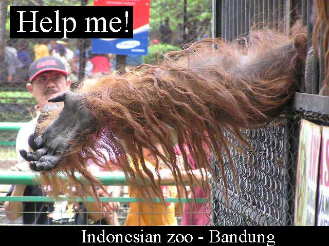 Indonesia zoo
