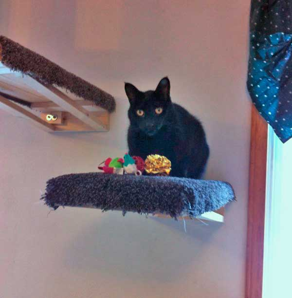 cat perched on a shelf
