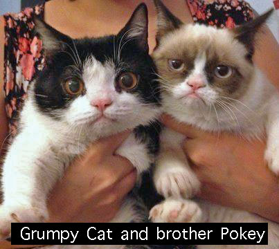 What breed is Grumpy Cat?