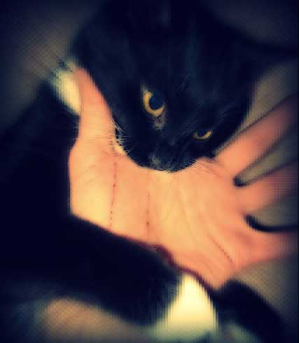 cat bite in play