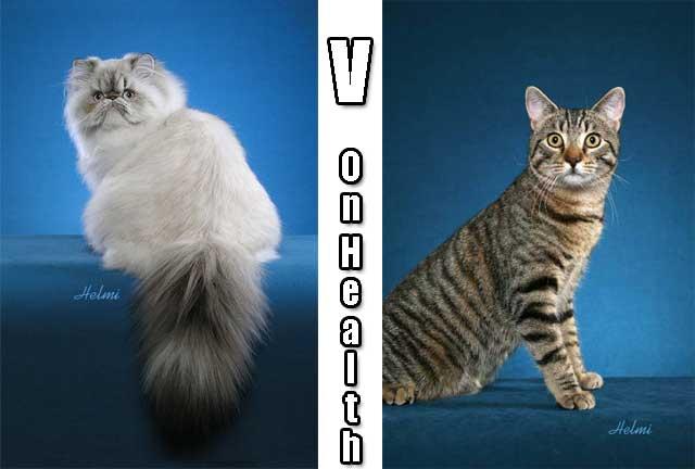 Cat breeds versus random bred cats on health
