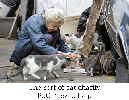 Cat charity work