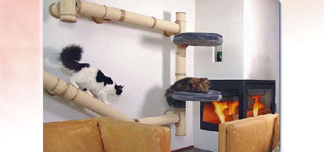 Cat furniture picture
