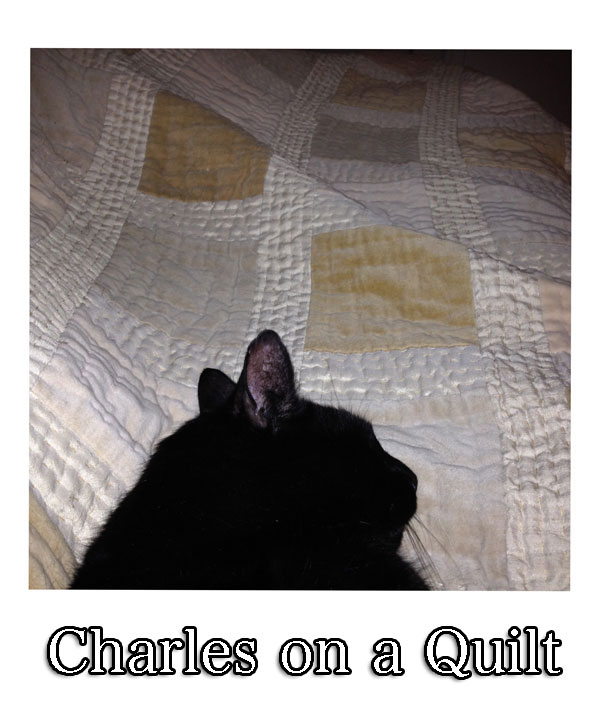 charlie-on-quilt-1