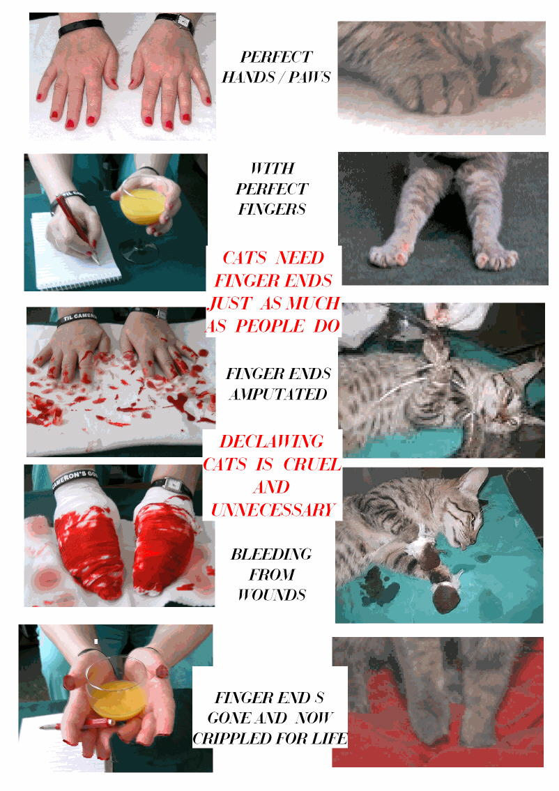 Declawing cats is like defingering people